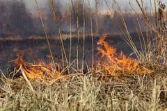 Καίγοντας τομέας χλόης την άνοιξη Στοκ φωτογραφία με δικαίωμα ελεύθερης χρήσης