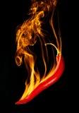 Καίγοντας τσίλι Στοκ Φωτογραφίες