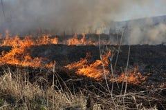 καίγοντας χλόη Στοκ Φωτογραφία