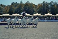 Καβάλλα στα άλογα Στοκ Εικόνες