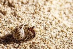 Καβούρια λίγων ερημιτών Στοκ Φωτογραφία