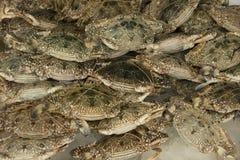Καβούρια θάλασσας για την πώληση στην αγορά της Ταϊλάνδης στοκ φωτογραφία με δικαίωμα ελεύθερης χρήσης