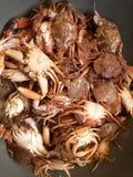 Καβούρια θάλασσας Στοκ φωτογραφίες με δικαίωμα ελεύθερης χρήσης