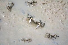 Καβούρια στην ακτή Στοκ Φωτογραφία