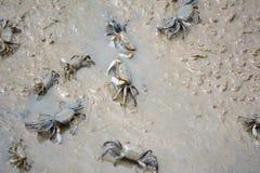 Καβούρια στην ακτή Στοκ φωτογραφία με δικαίωμα ελεύθερης χρήσης