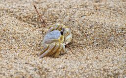 Καβούρι άμμου Στοκ Εικόνες