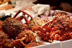Καβούρι αραχνών, αγορά ψαριών στην Ιταλία Στοκ εικόνα με δικαίωμα ελεύθερης χρήσης