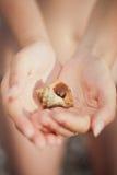 Καβούρι ερημιτών που σέρνεται σε ετοιμότητα Στοκ φωτογραφία με δικαίωμα ελεύθερης χρήσης