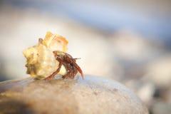 Καβούρι ερημιτών που σέρνεται στα αμμοχάλικα παραλιών Στοκ φωτογραφίες με δικαίωμα ελεύθερης χρήσης