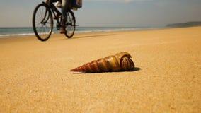 Καβούρι ερημιτών σε μια παραλία στη θάλασσα απόθεμα βίντεο