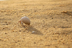 Καβούρι ερημιτών στην άμμο Στοκ Φωτογραφία