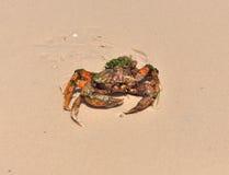 Καβούρι θάλασσας στην ακτή Στοκ φωτογραφία με δικαίωμα ελεύθερης χρήσης