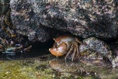Καβούρι κάτω από την πέτρα στην ακροθαλασσιά Στοκ εικόνα με δικαίωμα ελεύθερης χρήσης