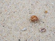 Καβούρι και άμμος ερημιτών στοκ εικόνα