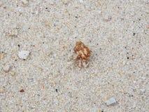 Καβούρι και άμμος ερημιτών στοκ εικόνες με δικαίωμα ελεύθερης χρήσης