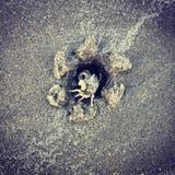 Καβούρι και άμμος Στοκ φωτογραφία με δικαίωμα ελεύθερης χρήσης