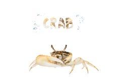 Καβούρι που απομονώνεται λίγο στο λευκό Στοκ Εικόνα