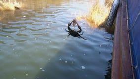Καβούρι που πιάνει το δόλωμα που καθορίζεται στο βίντεο γραμμών αλιείας φιλμ μικρού μήκους