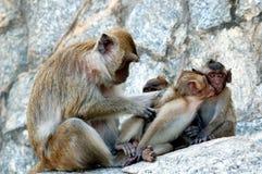 καβούρι που τρώει macaque Στοκ φωτογραφία με δικαίωμα ελεύθερης χρήσης