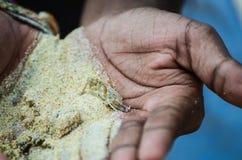Καβούρι στην άμμο στο φοίνικα Στοκ Εικόνα