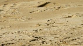 Καβούρι στην αμμώδη παραλία