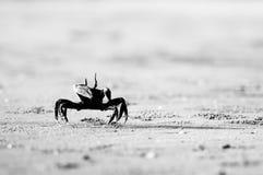 Καβούρι στην παραλία άμμου σε γραπτό Στοκ φωτογραφίες με δικαίωμα ελεύθερης χρήσης