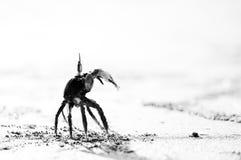 Καβούρι στην παραλία άμμου σε γραπτό Στοκ Φωτογραφίες