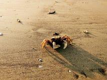 Καβούρι στην παραλία στοκ φωτογραφίες