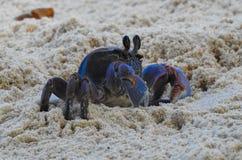 Καβούρι στην παραλία του νησιού Λα Digue Στοκ εικόνες με δικαίωμα ελεύθερης χρήσης