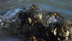 Καβούρι στο βράχο στην παραλία απόθεμα βίντεο