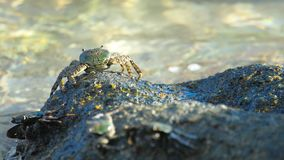 Καβούρι στο βράχο στην παραλία φιλμ μικρού μήκους