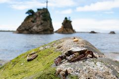 Καβούρι στο βράχο στοκ φωτογραφία