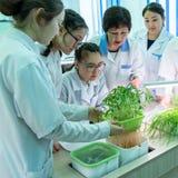 2019-09-01, Καζακστάν, Kostanay Οι μαθήτριες και ένας δάσκαλος στα άσπρα παλτά σε μια κατηγορία της βιολογίας ή βοτανικής εξετάζο στοκ εικόνα με δικαίωμα ελεύθερης χρήσης