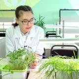 2019-09-01, Καζακστάν, Kostanay hydroponics Ανάπτυξη των πράσινων εγκαταστάσεων στο νερό χωρίς έδαφος Μαθήτρια με τα γυαλιά και έ στοκ εικόνες με δικαίωμα ελεύθερης χρήσης