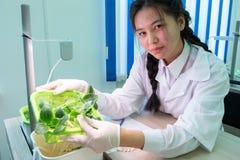 2019-09-01, Καζακστάν, Kostanay hydroponics Ασιατικό κορίτσι που παρουσιάζει νεαρούς βλαστούς κολοκυθιών με τις ρίζες Ανάπτυξη τω στοκ φωτογραφίες
