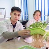 2019-09-01, Καζακστάν, Kostanay hydroponics Ο τύπος παρουσιάζει νεαρούς βλαστούς με τις ρίζες Σχολικό εργαστήριο Ανάπτυξη των πρά στοκ φωτογραφίες