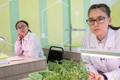 2019-09-01, Καζακστάν, Kostanay hydroponics Σχολικό εργαστήριο Ανάπτυξη των πράσινων εγκαταστάσεων στο νερό χωρίς έδαφος σπουδαστ στοκ εικόνα