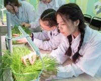 2019-09-01, Καζακστάν, Kostanay hydroponics Σχολικό εργαστήριο Μαθήτριες σε ένα άσπρο παλτό στην κατηγορία βοτανικής growing στοκ εικόνες με δικαίωμα ελεύθερης χρήσης