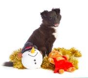 Καθίστε το τσοπανόσκυλο Shetland στα Χριστούγεννα με τα παιχνίδια στοκ εικόνες
