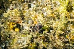 καθαρά νερά πηγής Στοκ φωτογραφία με δικαίωμα ελεύθερης χρήσης