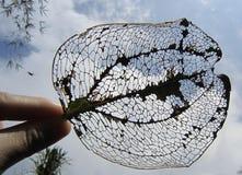 Καθαρά φύλλα Στοκ Εικόνες