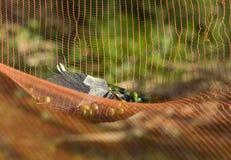 καθαρές ελιές στοκ εικόνες με δικαίωμα ελεύθερης χρήσης