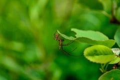 καθαρή αράχνη Στοκ εικόνες με δικαίωμα ελεύθερης χρήσης