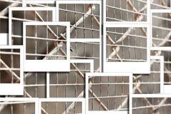 Καθαρή στιγμιαία φωτογραφία κλουβιών Στοκ Εικόνες