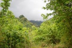 Καθαρή φύση στο άδυτο άγριας φύσης Umphang, επαρχία Tak, βορειοδυτική Ταϊλάνδη στοκ φωτογραφία