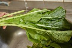 Καθαρίζοντας λαχανικό Στοκ Εικόνα