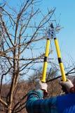 καθαρίζοντας δέντρο Στοκ εικόνες με δικαίωμα ελεύθερης χρήσης