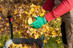 Καθαρίζοντας κήπος ατόμων από τα φύλλα Στοκ Εικόνες