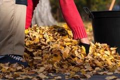 Καθαρίζοντας κήπος προσώπων Στοκ φωτογραφία με δικαίωμα ελεύθερης χρήσης