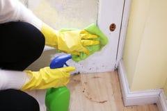 Καθαρίζοντας πόρτα γυαλιού γυναικών στην κουζίνα στοκ εικόνα